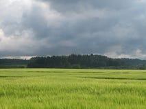 En el campo antes de la tormenta Foto de archivo libre de regalías