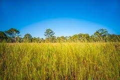 En el campo azul brillante Fotografía de archivo libre de regalías
