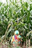 En el campo de maíz Imágenes de archivo libres de regalías