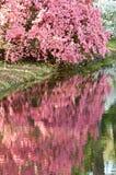 En el color de rosa Imagen de archivo libre de regalías