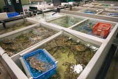 En el desarrollo acuático de la adición Fotos de archivo libres de regalías