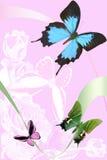 En el fondo color de rosa de la mariposa Fotografía de archivo libre de regalías