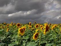 En el fondo del cielo de la tormenta Imagen de archivo libre de regalías