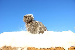 En el gato lanzó una bola de nieve Imagen de archivo libre de regalías