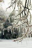 En el hielo Imagenes de archivo