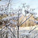 en el invierno Fotos de archivo libres de regalías