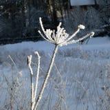 en el invierno Imagen de archivo libre de regalías