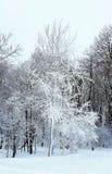 en el invierno Imagen de archivo