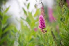 En el jardín del verano, crezco las flores Flores queridas hermosas Fotografía de archivo libre de regalías
