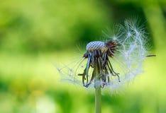 En el jardín del verano, crezco las flores Flores queridas hermosas Imagen de archivo