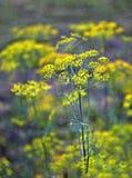 En el jardín del verde del otoño Fotografía de archivo