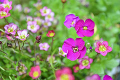 En el jardín en verano Fotografía de archivo libre de regalías