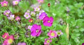 En el jardín en verano Imagenes de archivo