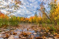 En el lago del bosque Imagenes de archivo