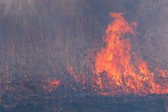 En el macizo ardiendo del bosque del humo y del fuego imagenes de archivo