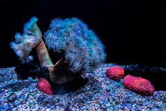 En el mar profundo imágenes de archivo libres de regalías
