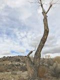 En el medio de desierto Fotos de archivo libres de regalías