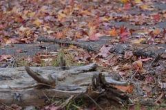 En el medio del bosque hay perfección Fotos de archivo