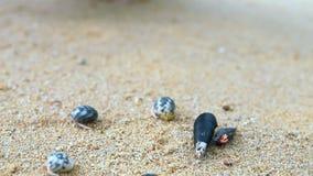 en el movimiento del cangrejo de ermitaño en la playa con la mano humana almacen de video