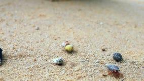 en el movimiento del cangrejo de ermitaño en la playa almacen de metraje de vídeo