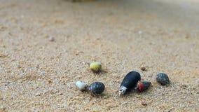 en el movimiento del cangrejo de ermita?o en la playa almacen de metraje de vídeo
