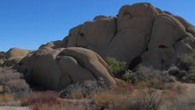 En el movimiento en Joshua Tree Park Cactus Rounded del desierto las piedras grandes reducen 4K almacen de video