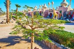 En el parque de Sharm el Sheikh, Egipto Fotografía de archivo