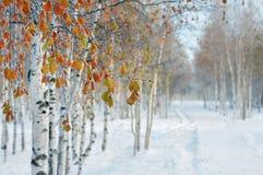 En el parque del invierno Imágenes de archivo libres de regalías