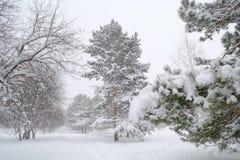 En el parque en invierno, nieve que cae que sopla una brisa fuerte Fotografía de archivo libre de regalías