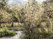 En el parque - paja de la hierba Imagen de archivo libre de regalías