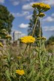 En el parque - plantas amarillas y cielos azules Fotografía de archivo libre de regalías