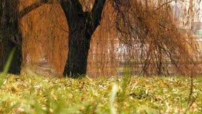 En el parque por el lago Fotografía de archivo libre de regalías