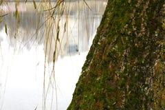 En el parque por el lago Fotos de archivo