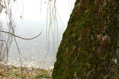 En el parque por el lago Fotos de archivo libres de regalías