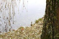 En el parque por el lago Foto de archivo libre de regalías