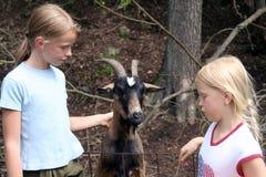 En el parque zoológico Fotografía de archivo libre de regalías