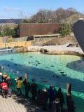 En el parque zoológico foto de archivo libre de regalías