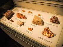 En el pasillo del centro de exposición muestra un oro en el diferente tipo de las rocas, exhiben en un caso de cristal fotografía de archivo libre de regalías