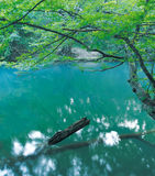 En el río Foto de archivo