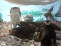 En el Rosellón (Francia) del canet del acuario Fotos de archivo
