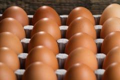 En el substrato son los huevos marrones del pollo Imagen de archivo libre de regalías