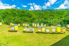En el territorio del monasterio de Moraca es un colmenar con las abejas Fotografía de archivo