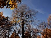 En el top de la colina crece el diverso treesh Fotografía de archivo