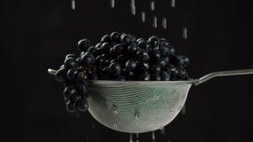 En el vídeo que vemos las uvas en un tamiz, agua cae la caída del top, fondo negro almacen de metraje de vídeo