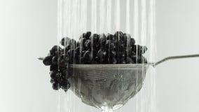 En el vídeo que vemos las uvas en un tamiz, caída del agua de la cámara superior va de la derecha a la izquierda, fondo blanco almacen de video