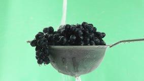 En el vídeo vemos las uvas en un tamiz, agua que cae del top en un jet, fondo verde almacen de metraje de vídeo