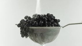 En el vídeo vemos las uvas en un tamiz, caída del agua del top en paradas de un jet entonces, fondo blanco almacen de video