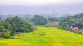 En el valle de los campos del arroz foto de archivo libre de regalías