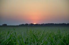 En el verano los sistemas del sol Imágenes de archivo libres de regalías