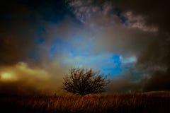 En electricallandscape med det lilla trädet Julian Bound Royaltyfria Bilder